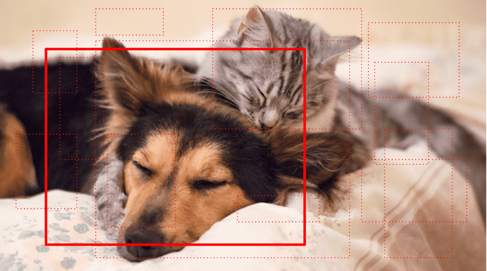 Cat with dog object detection with single region proposal for r-cnn